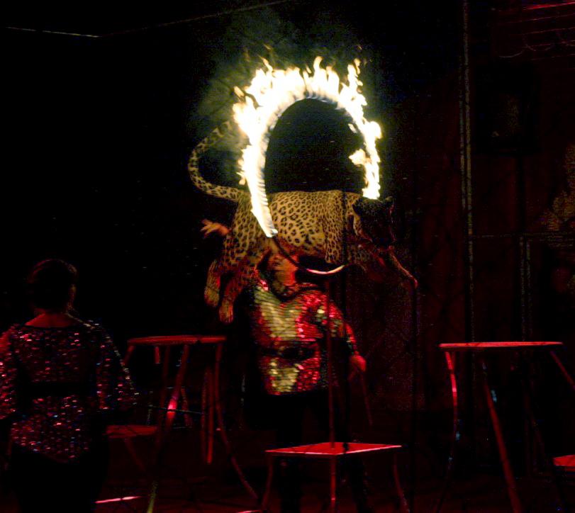 В Калуге прошла премьерная программа цирка «Золотой Дракон» «Акула против хищников»
