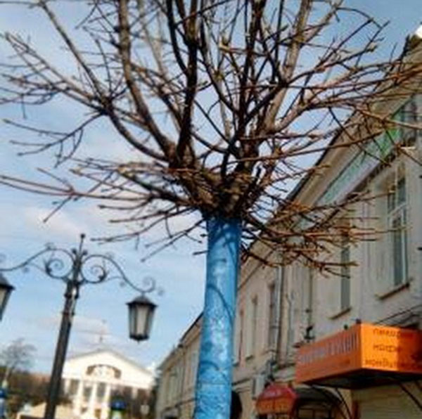 Стволы кленов на Театральной улице стали небесно-голубыми