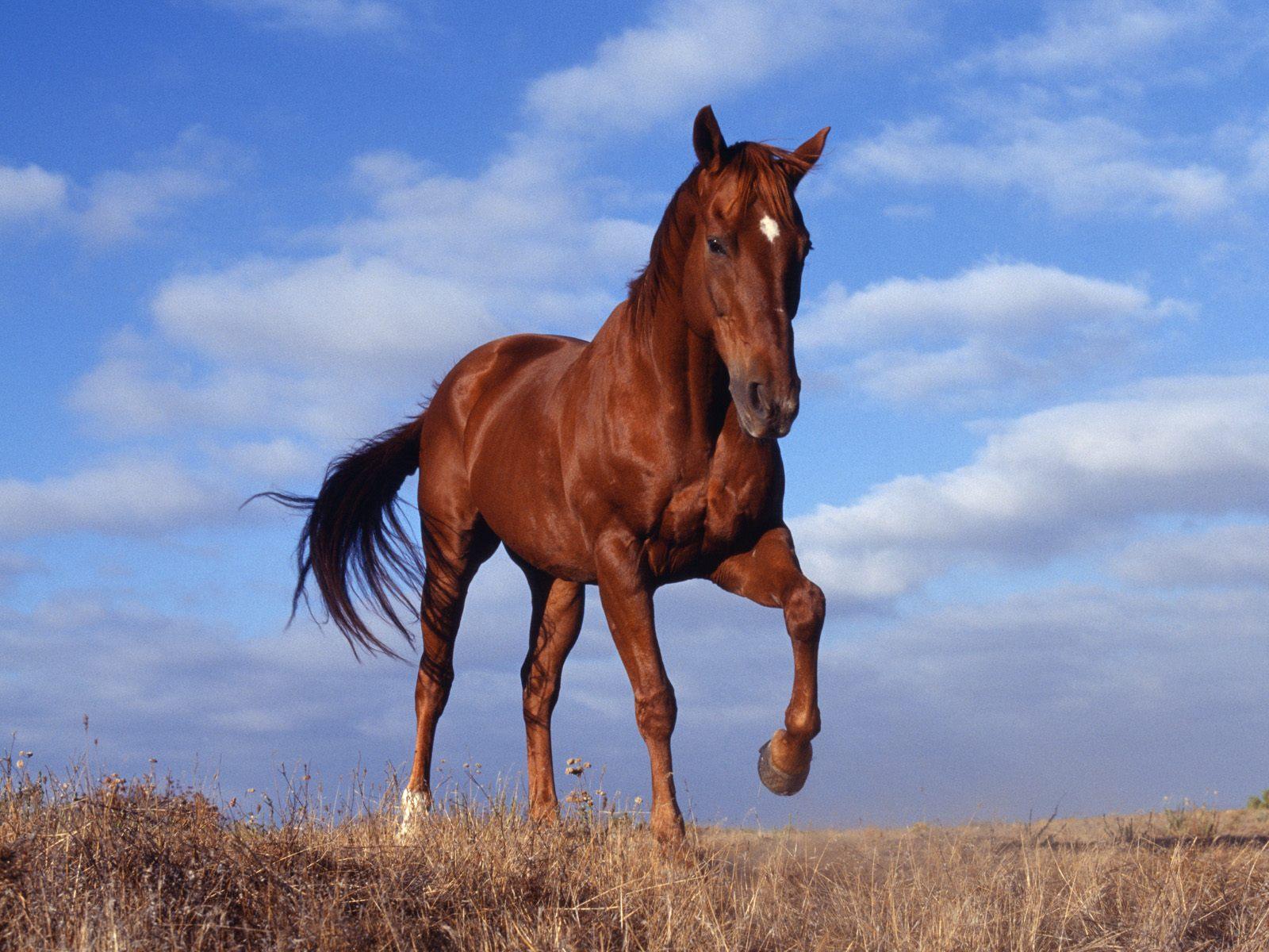 Праздник «Волшебный мир лошади» состоится в Калужской области