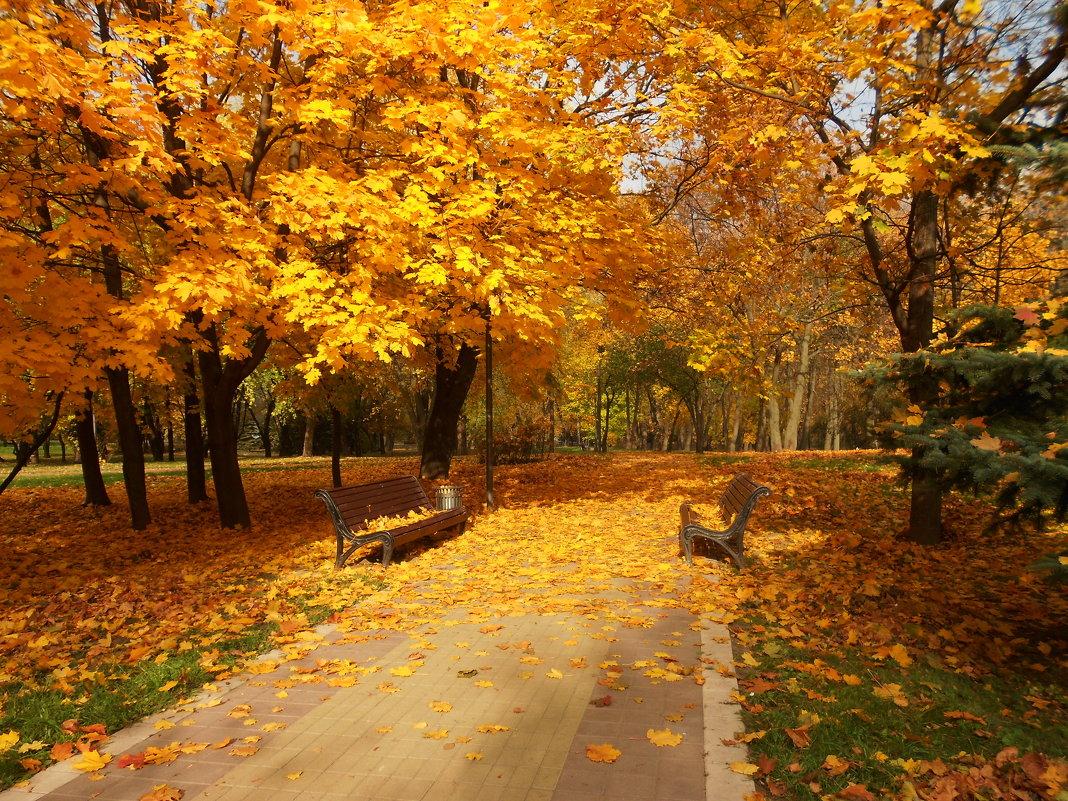 В калужском парке прошла «Золотая осень»