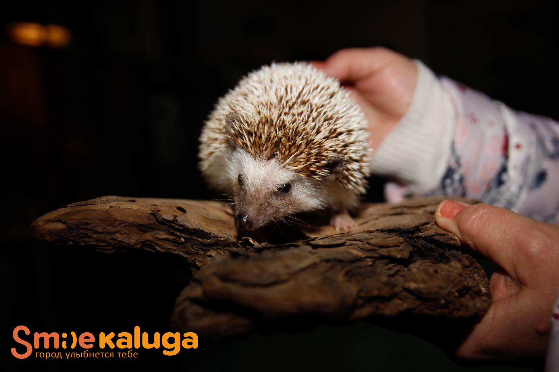 Калужский мини-зоопарк приглашает на экскурсию
