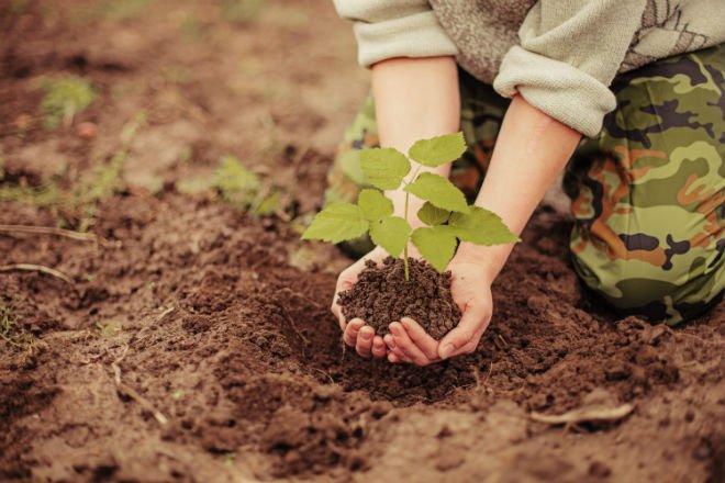 В Калуге высадили свыше 3-х тысяч молодых деревьев