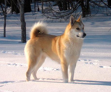 В Калуге состоялась выставка охотничьих собак