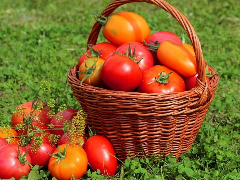 В Городском досуговом центре открылась выставка садоводов и огородников