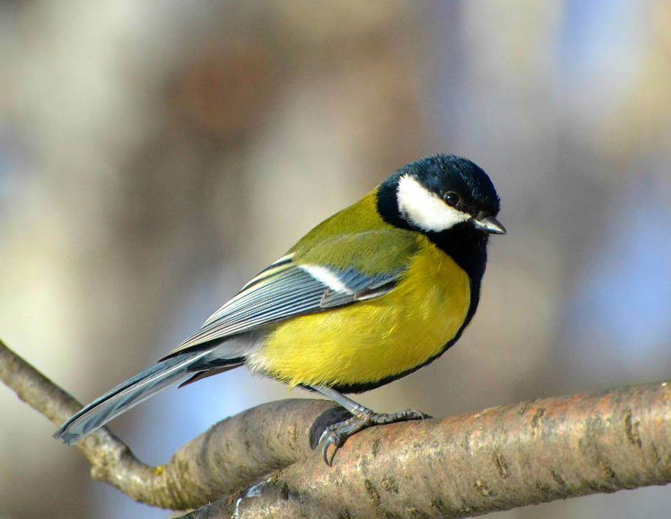 Стартовала экологическая акция «Покормите птиц зимой»