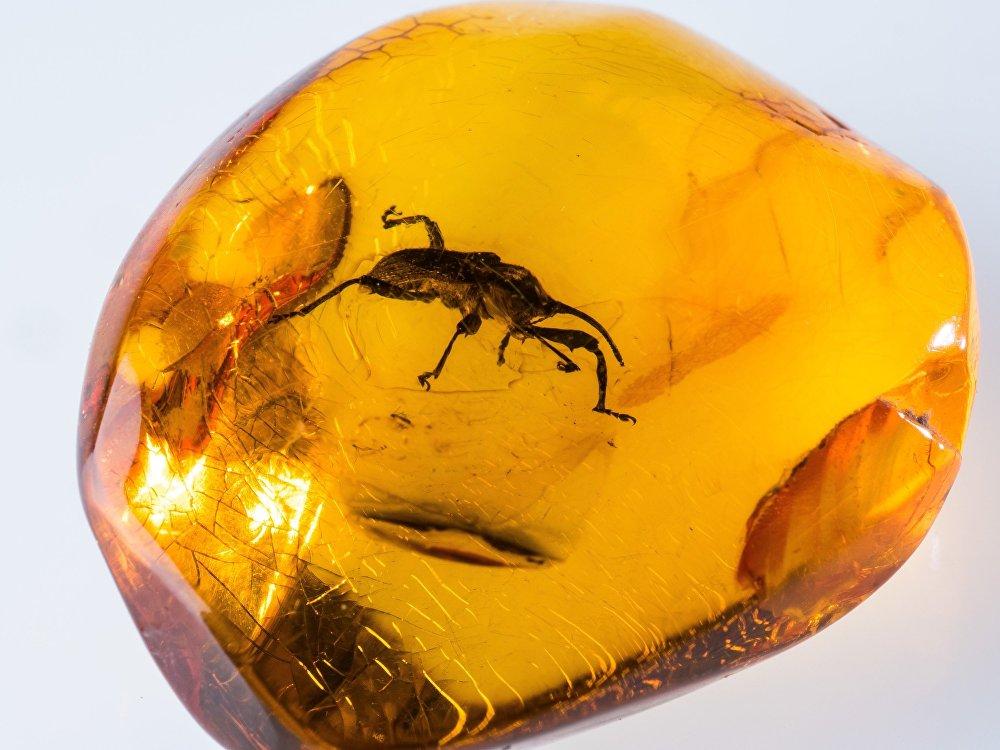 Калужане смогут увидеть доисторических насекомых в янтаре