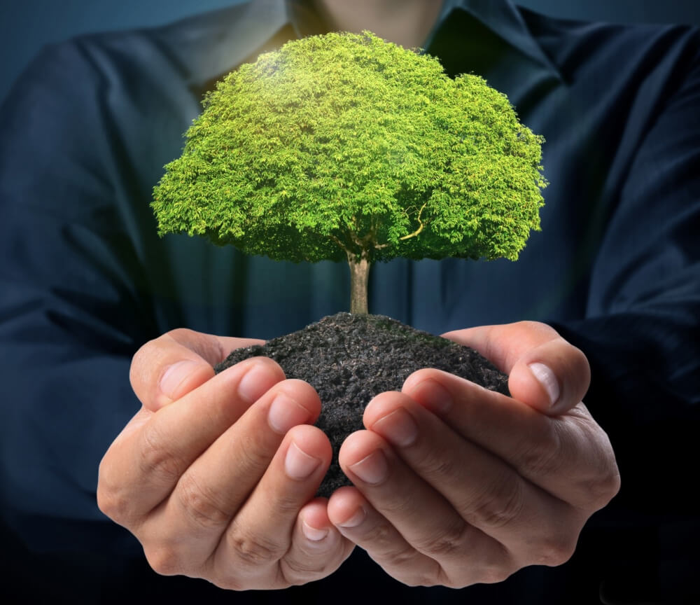 В Калуге проходят мероприятия по озеленению