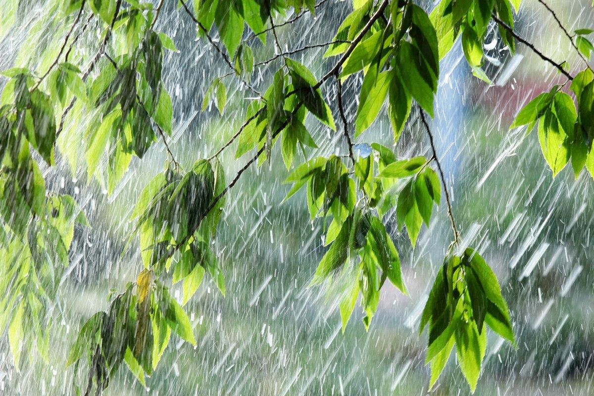 В Калуге ожидается дождливая неделя