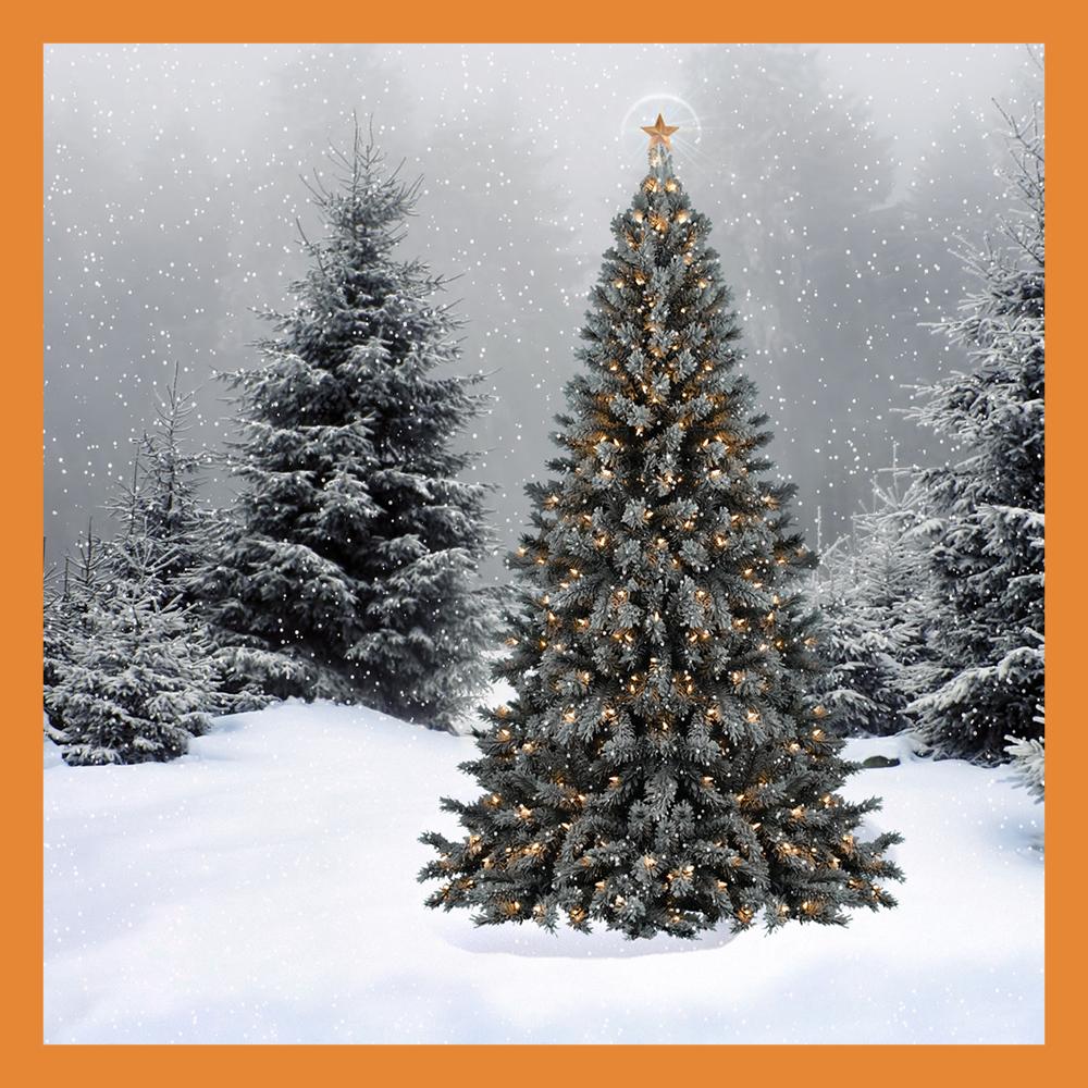 В Калужской области почти шесть тысяч хвойных деревьев заготовят для новогодних праздников