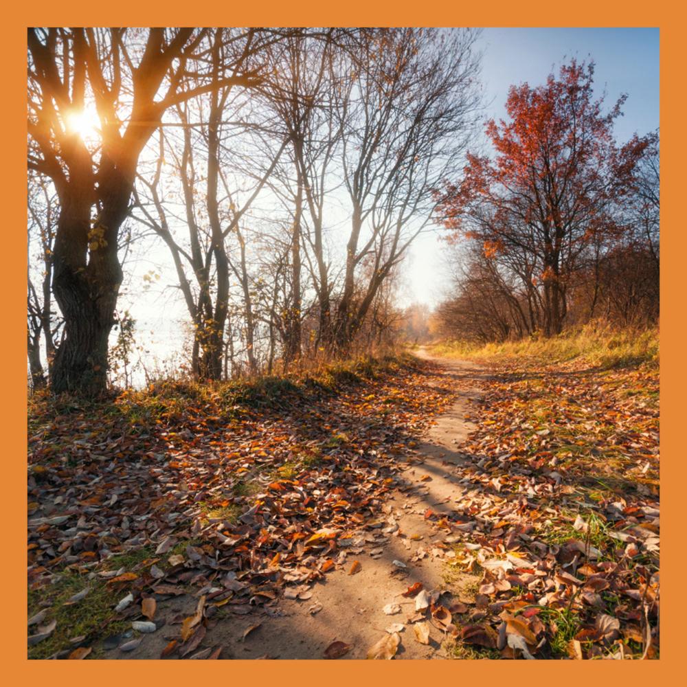 Октябрь порадует калужан теплой погодой